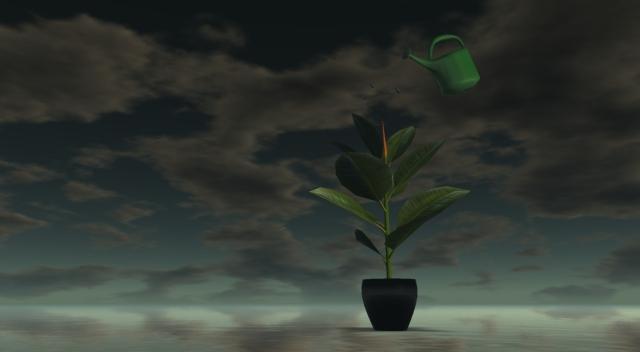 rubber plant_002