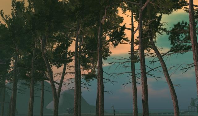 pines-1_001