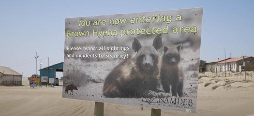 kolman hyena sign